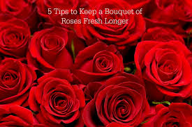 bouquet of roses 5 tips to keep a bouquet of roses fresh longer sober julie