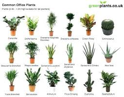 exciting best houseplants for cats gallery best image engine