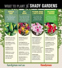 the best plants for a shady garden australian handyman magazine