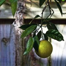 Planting Fruit Trees In Backyard 10 Tips For Growing Fruit Trees At Home Treehugger