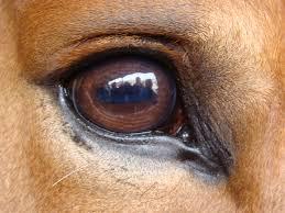 Are Horses Color Blind The Eyes Have It David Ramey Dvmdavid Ramey Dvm