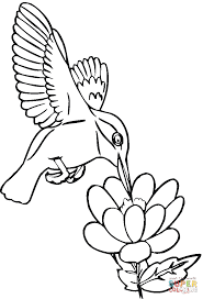 hummingbird drinks nectar coloring page free printable coloring