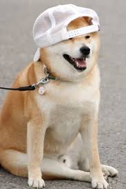 What Breed Is Doge Meme - snap backs and tattoos dressed up amimals pinterest shiba dog
