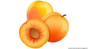 downloads 7 apricot royalty free clipart fruit names a z with
