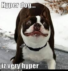 Hyper Dog Meme - hyper dog cute dogs pinterest dog