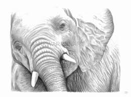 pencil drawings animals nature wildlife art prints cows sheep