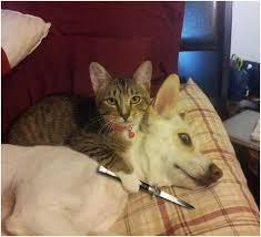 Meme Generator Cat - sad cat meme generator image memes at relatably com