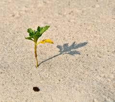 scion plant free images beach sand plant leaf flower shadow soil