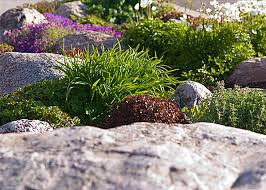 garden landscape ideas plants photograph 20 fabulous rock