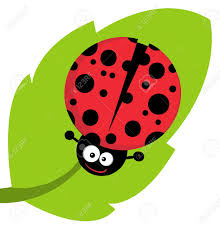 cute lady bug on leaf royalty free cliparts vectors and stock