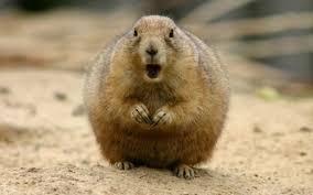 Gopher Meme - create meme subloop subloop gopher fat hamster pictures