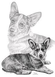 corgi dog art print drawing by kelli swan