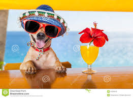 cocktail party dog stock photo image 50778269