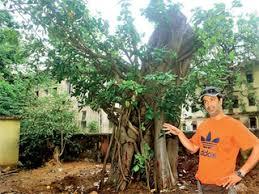 century banyan tree back on its mumbai mirror