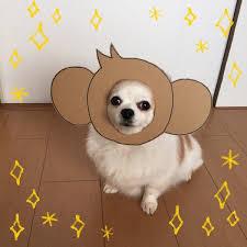 Chihuahua Halloween Costume Chihuahua U0027s Halloween Costume Cooler U2014 Koreaboo