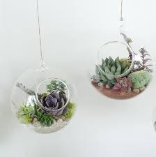 terrariums space gardening