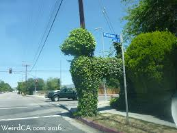 Topiary Dog Ivy Poodle Weird California