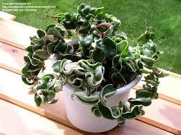Easy Care Indoor Plants 61 Best House Plants Images On Pinterest Gardening Indoor