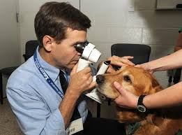 Illnesses That Cause Blindness Blindness In Dogs Causes And Symptoms