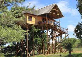 famous tree houses the best treehouse stays in south africa drive south africa