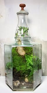 698 best terrariums and aeriums images on pinterest plants air