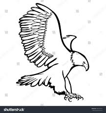 freehand sketch illustration eagle hawk bird stock vector