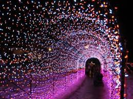 zoo lights baton rouge 101 best sweet home chicago images on pinterest chicago illinois