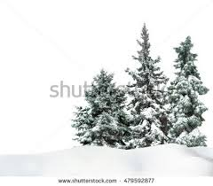 snow tree stock images royalty free images vectors