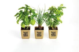 Kitchen Herb Garden Kit by Herb Garden Cliparts Free Download Clip Art Free Clip Art On
