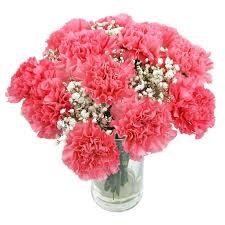 Red Carnations Order Carnations Send Carnation Flowers Carnation Sale