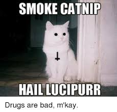 Drugs Are Bad Meme - 25 best memes about smoke catnip smoke catnip memes