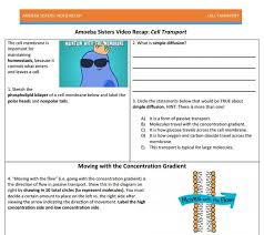Cell Transport Skills Worksheet Answers 27 Best Amoeba Handouts Images On Visit