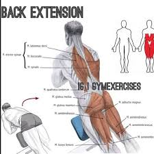 Back Extension Sit Up Bench 34 Best Workouts Images On Pinterest Workouts Exercises And Gym