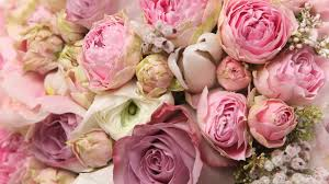 vintage rose wallpapers 69 rose flower images rose pictures and