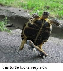 Turtle Memes - this turtle looks very sick turtle meme on esmemes com