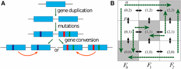 gene conversion facilitates adaptive evolution on rugged fitness