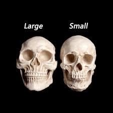 Halloween Skeletons Life Size by Large Life Size 1 1 Resin Human Skull Model Anatomical Medical