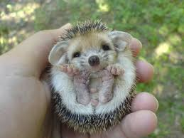 29 adorable tiny animals that will fit in the palm of your hand