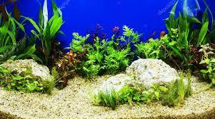 Aquascape Freshwater Aquarium Aquascaping Of The Beautiful Planted Tropical Freshwater Aquariu