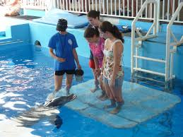 Six Flags Dolphin Swim Gifts The Winter Dolphin Chronicles
