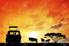 jeep silhouette jeep safari at sunset stock photo picture and royalty free image