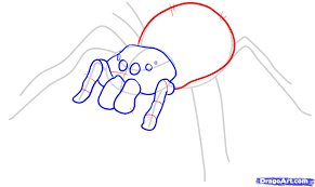 how to draw an easy spider step by step bugs animals free