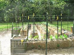 straw bale garden u2013 one gardener u0027s project walter reeves the