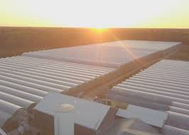 can on weedmd to retrofit 610 000 sq ft perfect pick greenhouse