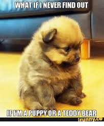 Funny Bear Meme - 25 best memes about bears funny bears funny memes