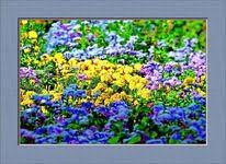 prato fiorito trucchi prato fiorito colorare una foto in b n