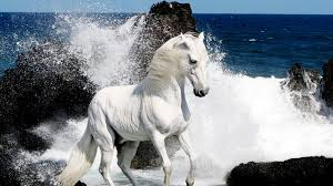 ferrari horse wallpaper white horse wallpaper 25693 1600x900 px hdwallsource com