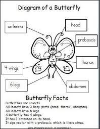 label a butterfly for kindergarten google search butterflies