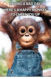 Funny Monkey Meme - 25 best memes about happy monkey happy monkey memes