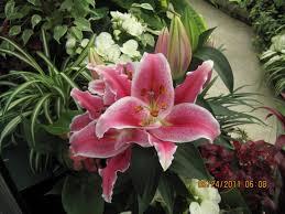 garden state flower show
